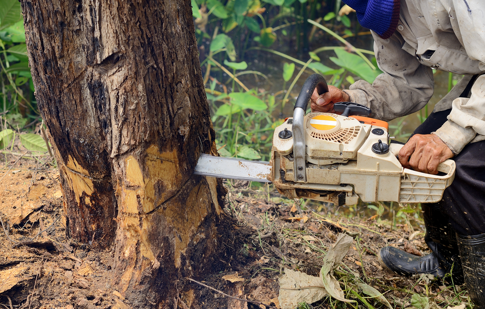 tree expulsion administration